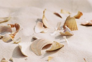 Broken Seashells