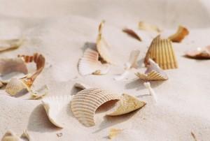 Broken Seashells